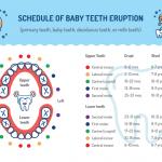 when do babies teeth come through